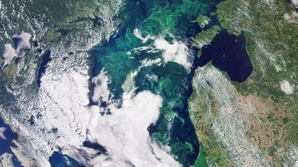 In this image, captured by the Copernicus Sentinel-3 mission, the green algae blooms swirling around the Baltic Sea are visible.